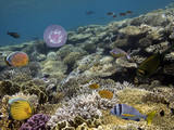 Underwater shoot of vivid coral reef with a fishes - 211736750