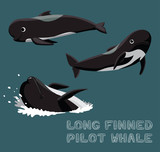 Long Finned Pilot Whale Cartoon Vector Illustration - 211736901