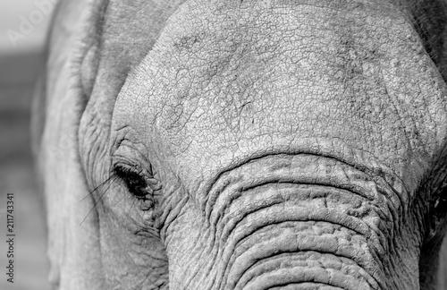 Fototapeta Elephant eye
