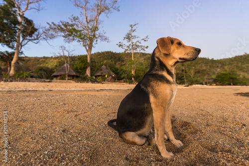 Aluminium Tropical strand Hund am Strand, Philippinen