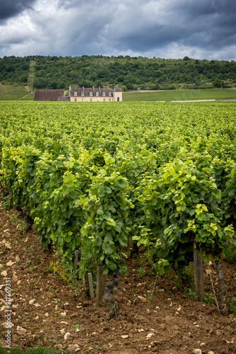 Aluminium Wijngaard Chateau with vineyards, Burgundy, France