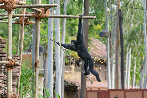 Fotobehang Aap Monkey Flying on Ropes at the Zoo
