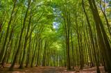 Buchenwald in Nationalpark Jasmund bei Sassnitz auf der Insel Rügen - 211773795