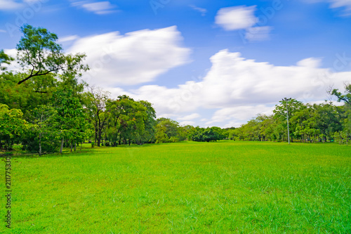 Zielony drzewo w pięknym parkowym ogródzie pod niebieskim niebem