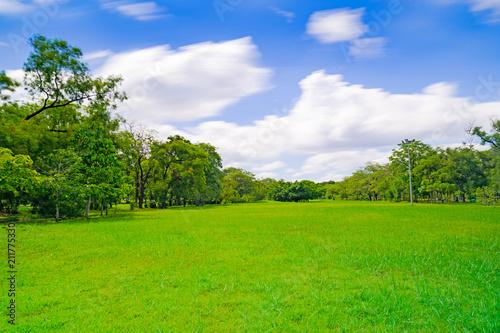 Green tree in a beautiful park garden under blue sky