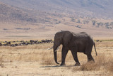 Elephant safari tanzanie
