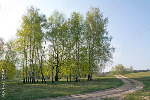 Spring birch forest and road