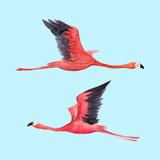 Watercolor flamingo vector illustration - 211781186