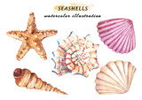 Watercolor set of underwater life objects - various tropical seashells and starfish. Hand drawn illustrations isolated on white background. - 211785342