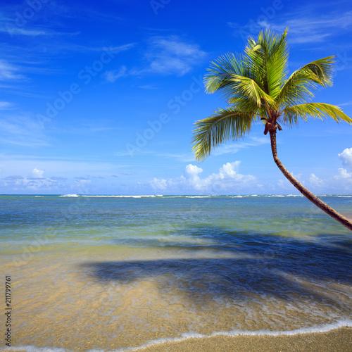Palm tree branch on tropical beach.