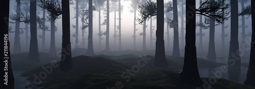 Trees in the fog. The smoke in the forest in the morning. A misty morning among the trees.