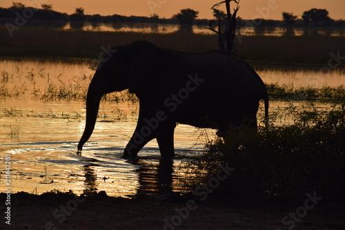 Fototapeta Elephant at Sunset
