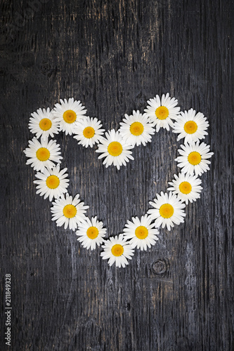 Daisy heart on dark wood - 211849328