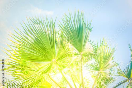 Plexiglas Geel Palmas in blue sky