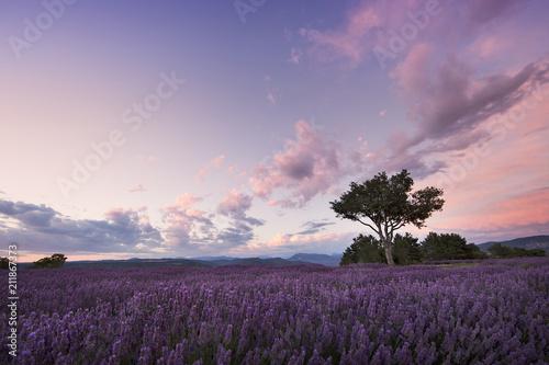 Aluminium Aubergine Sunset over lavender