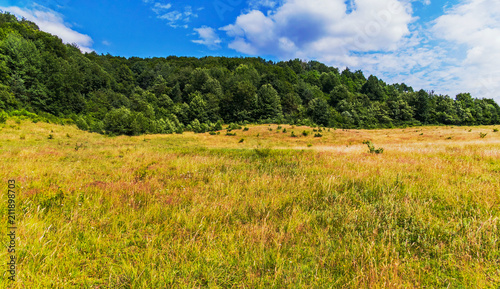 Fotobehang Honing A broad pasture with thick, high grass on a glade in the middle of a thick forest on a hill