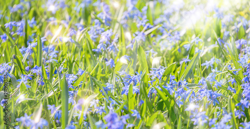 Aluminium Natuur bright background with blue flowers in grass