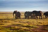 Herd of elephants in Amboseli, Kenya