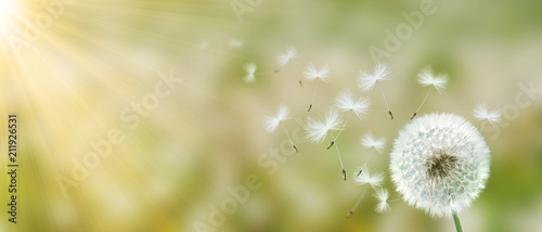 Aluminium Paardenbloemen Schöne Pusteblume