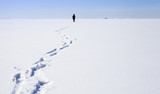 Lonely person walking on frozen Baltic Sea - 211930130