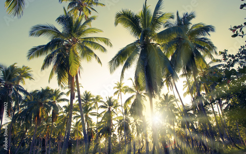 Foto Murales Tropical sunset with palm trees .
