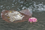 Bangkok, Thailand, Erawan Museum offerings of lotus flowers and coins are deposited in the water surrounding the giant statue of the three-headed elephant