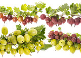 fresh gooseberries isolated on a white background - 211942944