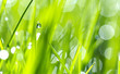 Leinwanddruck Bild - Drops of dew on the beautiful green grass, background close up