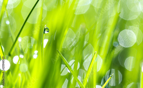 Drops of dew on the beautiful green grass, background close up - 211944569