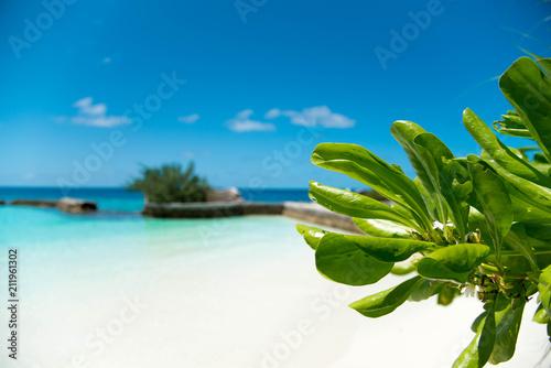 Fotobehang Tropical strand Seaview