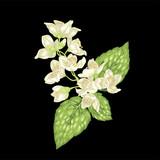 Flower jasmine branch design element in realistic vector illustration