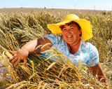 Overweight woman enjoying life during summer vacations. Happy obese farmer relaxing on wheat field. Healthy lifestyle concept. - 211976302