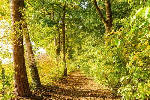 forest path with autumnal colored trees