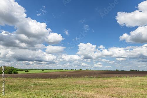 Fototapeta Beautiful meadow on sunny day.