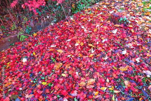 Plexiglas Candy roze 秋の湖畔の風景16
