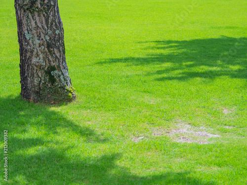 Aluminium Lime groen 芝生と樹木