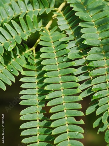 잎사귀와 물방울  - 212013545