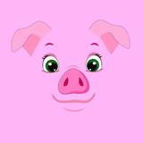 vector illustration pig