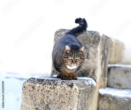 Photo of a beautiful macro furry fat cat - 212045991