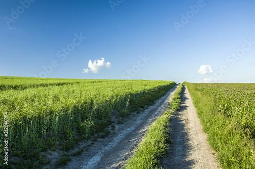 Fotobehang Zomer Road through green rapeseed field, horizon and sky