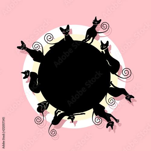 Fototapeta Frame with black cats