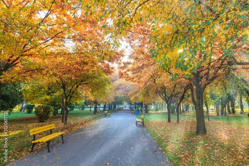 Plexiglas Herfst Romantic scene with park alley in fall season, Brasov, Romania