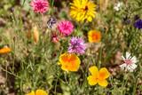 Blumen am Wegesrand, Blütenpracht