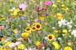 canvas print picture - Wildblumenwiese im Sommer