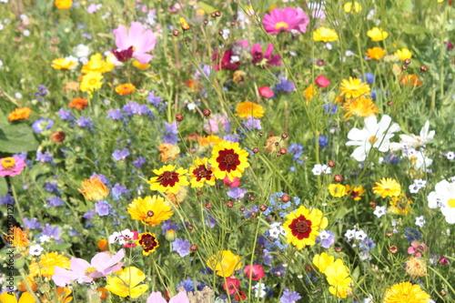 canvas print picture Wildblumenwiese im Sommer