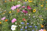 Wildblumenwiese im Sommer