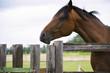 pretty horse on a farm near a wooden fence in summer