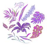 Vector summer tropical leaves, decorative set - 212111168