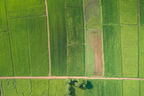 Aerial view from flying drone. Beautiful green area of young rice field or meadow in rainy season - 212115969