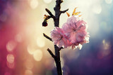 pink plum flowers  beautiful blossom